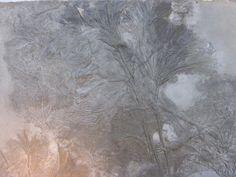 zeelelie seirocrinus subangularis stekelhuidigen: zeelelies