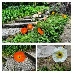 Disfrutando Colombia foto By @manuel_ribeiro78 #SomosTurismo #sintra #flores #flower #jardim #garden #monserrate #palaciomonserrate