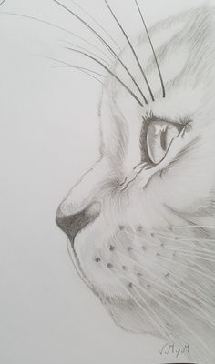Most up-to-date Absolutely Free pencil drawing anime Thoughts These pencil drawing techniques from top artists will allow you to take your drawing skills to anoth Pencil Art Drawings, Cool Art Drawings, Drawing Sketches, Cat Sketch, Sketching, Sketch Art, Beautiful Drawings, Drawings Of Cats, Cool Simple Drawings