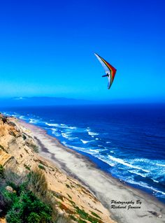 Bird Man - California - USA