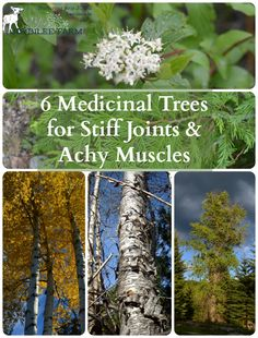 Arthritis Remedies Hands Natural Cures - Harvest bark by cutting a branch from the tree and peeling back the bark from the entire branch. Natural Health Remedies, Natural Cures, Natural Healing, Herbal Remedies, Natural Treatments, Natural Oil, Natural Foods, Holistic Remedies, Healing Herbs