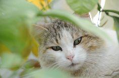 In Defense of Outdoor Cats: A Veterinarian's Perspective