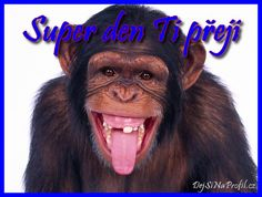 showing-his-teeth-and-toungue-chimpanzee-pictures-1600x1200