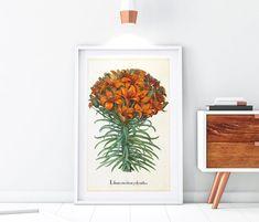 Botanical Illustration, Botanical Prints, Orange Lily Flower, Floral Illustrations, Botany, Original Image, Printable Wall Art, Wall Decor, Printables