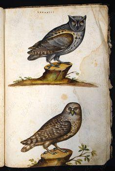 Atlante ornitologico - Biblioteca dell'Archiginnasio
