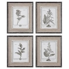 Set of 4 framed botanical prints.    Product: 4-Piece wall art setConstruction Material: Pine, MDF, flax and linen