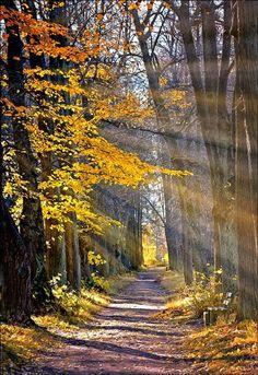 Quiet walk through the woods.