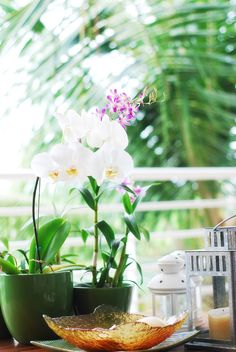 Orchids have an elegant simplicity matched with such bright colors that I find very pleasant. This is how to take care of orchids.