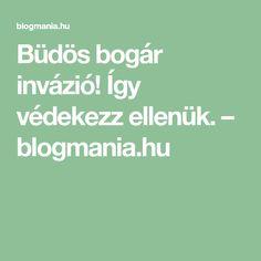 Büdös bogár invázió! Így védekezz ellenük. – blogmania.hu