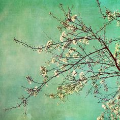 Green with almond (or cherry) blossom branches
