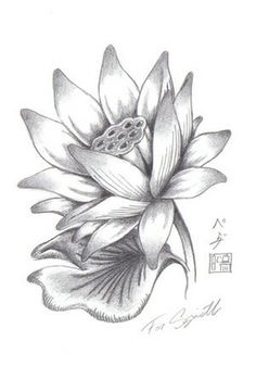 Pencil sketches lotus flower 1000 images about lotus flowers on lotus flower drawings for tattoos more tattoos pictures under lotus tattoos html code for tattoo picture mightylinksfo
