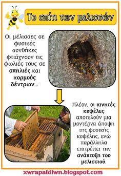 """""""Ταξίδι στη Χώρα...των Παιδιών!"""": Ο ΘΑΥΜΑΣΤΟΣ ΚΟΣΜΟΣ ΤΗΣ ΜΕΛΙΣΣΑΣ: ΕΠΟΠΤΙΚΟ ΥΛΙΚΟ ΚΑΙ ΦΥΛΛΑ ΕΡΓΑΣΙΑΣ Bee Keeping, Spring Crafts, Preschool Activities, Kids And Parenting, Diy And Crafts, School Ideas, Bugs, Education, Insects"""