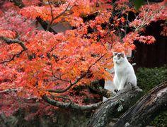 どこを切り取っても画になる!美しい×かわいい「紅葉と猫」のコラボレーション25選