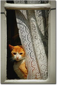 Looking out… by Concha D. (CONCHADEZA) via Flickr  (Can you hear me now??  meow meow?? - JK)