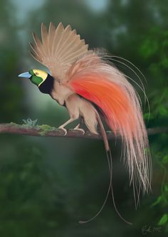 Raggiana Bird of Paradise (Photoshop Painting) by Rick-Lilley on deviantART