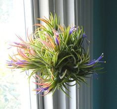 Práticas, as airplants são uma ótima pedida para trazer o verde para dentro de casa