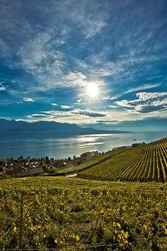 Lavaux Region near Lake Geneva, Switzerland