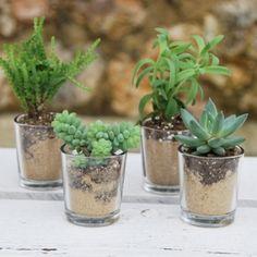 mini plante grasse + pot