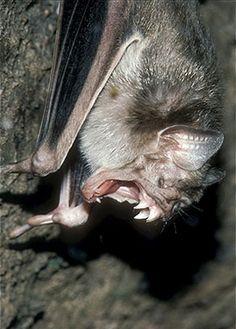 Holy Bat teeth!!!!!!!