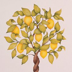 Wall Mural Stencils Citrus Topiary Wall Stencils | Royal Design Studio