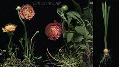 dark botanicals: how-to from Terrain