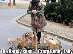 Funny Animal Pictures With Captions THE CRAZY BUNNY LADY!!!!!!!!!!