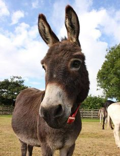 Despite being the smallest donkey, Gareth is the king of the herd. He's a little donkey superstar we just know you'll love, so adopt him today and start a year of fun.