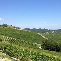 Magda Pedrini vineyards in Gavi | Gavi and its treasures | BrowsingItaly.com