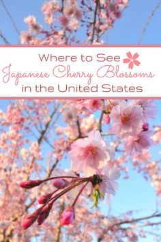 The Best Places to See Cherry Blossoms in the US - Travels in Translation