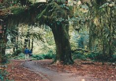 trail through Hoh Rain Forest in Olympic Natn'l Park in northern WA, 1995