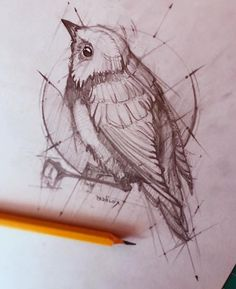 easy bird sketch for kids