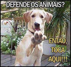 EU DEFENDO!!! ✋️☝️❤ #amorincondicional #amocachorro #amoanimais #amogato #euprotejoanimais #eudefendoosanimais #direitoanimal #cachorro #gato #cachorroterapia #cachorroetudodebom #caopanheiro #petmeupet #petshop