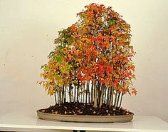 Here are some amazing forest pictures, I like bonsai forests most of all, just incredible nature art: