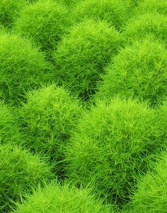 Kawaguchi Green Center Japan