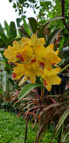 Women's Special: Four-Strategies Flowers Can Modify Your Working Day-To-Day Lifestyle One Of My Favorite Hobbies Is Planting Orchids. Unusual Flowers, Unusual Plants, Beautiful Flowers, Orchid Tree, Orchid Plants, Ground Orchids, Globe Amaranth, All About Plants, Floating Flowers