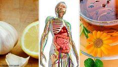 De când nu ai mai luat măsuri pentru detoxifierea sistemului limfatic? Nu ai făcut acest lucru niciodată? Stai liniștit/ă. În realitate, puține persoane Este important să folosim remedii pentru detoxifierea sistemului limfatic pentru a asigura buna funcționare a organismului și a preveni îmbolnăvirea. Health And Beauty Tips, Watermelon, Wordpress, Blog, Lymphatic System, Healthy Nutrition, Natural Remedies, Home, Health