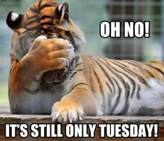 oh no only tuesday The best way to outset your day is by reading funny good morning quotes. Here is our collection of cute, sweet, and romantic Funny Good Morning Quotes Tuesday Quotes Funny, Tuesday Humor, Funny Quotes, Funny Memes, Humor Quotes, Weird Quotes, Motivational Memes, Humor Humour, Unique Quotes