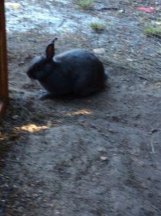 My second rabbit