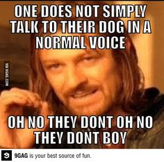 One does not simply talk to their dog in a normal voice.