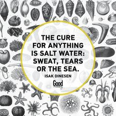 The cure to everything is salt water: sweat, tears or the sea. Shark S, Salt And Water, Afrikaans, Wise Words, The Cure, Funny Quotes, Wisdom, Faith, Sayings