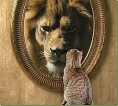 cat-looking-in-mirror-sees-lion