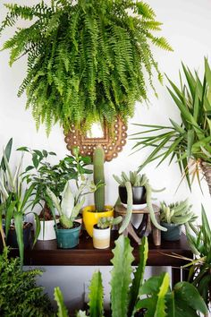 Love that big boston fern with the succulents and cacti.