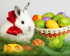 Cute Easter Bunny Wallpaper