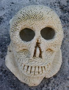 JUST TODAY 13/06 40% OFF! Brain Coral Skull Sculpture unique fish tank special by RumCay, $715.00