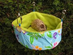guinea pig hammock attach cage - Google Search