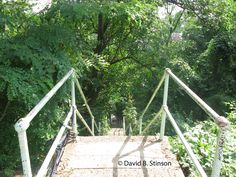 Forbes Field Stairway
