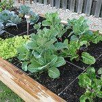 square foot gardening method for raised beds