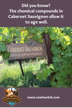 Did you know Cabernet Sauvignon is originally from France and it's parents are Sauvignon Blanc and Cabernet Franc? 5 little-known facts about Cabernet. Sauvignon Blanc, Cabernet Sauvignon, Most Popular Red Wine, California Wine Club, Wine And Food Festival, Wine Gift Baskets, 5 Things, Wine Country, Wine