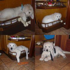 30 chiens qui s'assoient n'importe où, dans le déni le plus total   Buzzly