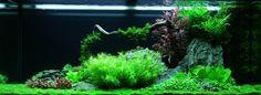 Layout 62 - Tropica - Tropica Aquarium Plants